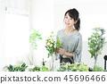 ช่อดอกไม้ความงามพฤกษศาสตร์วิถีชีวิตความงาม 45696466