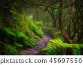 Path in Anaga Rainforest on Tenerife island, Spain 45697556