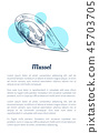 seafood, mussel, shellfish 45703705