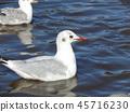 백색, 흰색, 하얀색 45716230