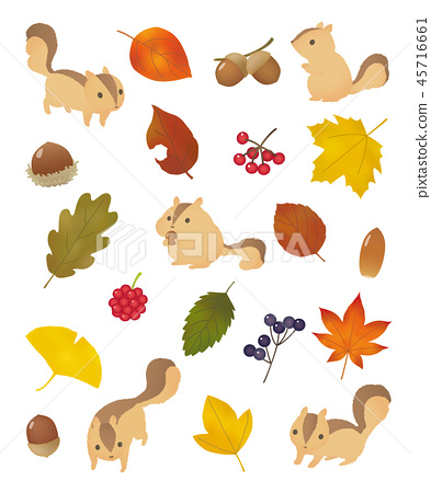 Squirrel and fallen leaves 45716661