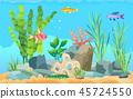 fish, ocean, underwater 45724550