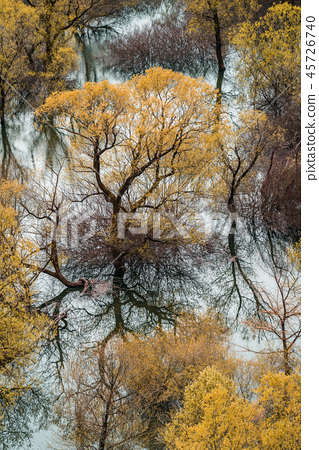 Trees reflected in the waters of the Skadar Lake 45726740