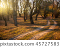 autumn, fall, forest 45727583