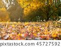 autumn, fall, leaf 45727592