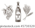Hop and Wheat Bunches Isolated Beer Ingredients 45730320