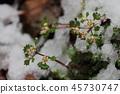 ฤดูหนาว,ฤดูใบไม้ผลิ,ปีนผา 45730747