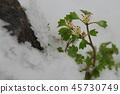 ระหว่างฤดูหนาวและฤดูใบไม้ผลิ 45730749