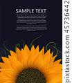 Sunflower text card 45736442