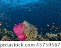 sea, fish, tropical 45750567