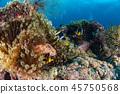 sea, fish, tropical 45750568