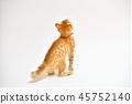 고양이, 고양이, 고양이, 고양이, 차 호랑이 무늬의 고양이입니다. 45752140
