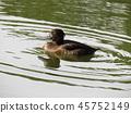 ฤดูใบไม้ร่วง,แหล่งน้ำ,สระน้ำ 45752149