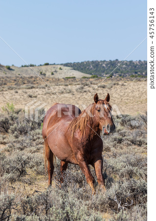 Wild Horse in the High desert 45756143