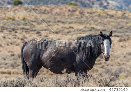 Wild Horse in the High desert 45756149