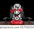 dog, phone, telephone 45758350