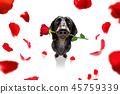 animal blossom dachshund 45759339