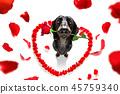 animal blossom dachshund 45759340
