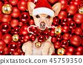 ball christmas dog 45759350