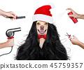 animal, christmas, dog 45759357