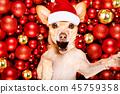 christmas dog santa 45759358