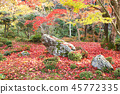 Autumn leaves garden 1 45772335