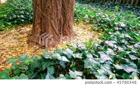 Ginkgo Tree Fallen leaves 45780348