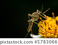 mosquito on flower in the nature 45783066