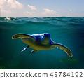 Green Sea Turtle 45784192