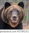 animal, forest, wildlife 45784231