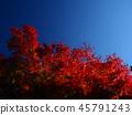 ต้นเมเปิล,ต้นออทัม,ฤดูใบไม้ร่วง 45791243
