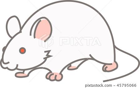 实验小鼠 45795066