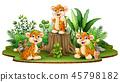 animal leopard bush 45798182