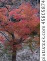 단풍, 홍색, 빨간색 45805874