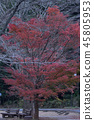 단풍, 홍색, 빨간색 45805953