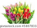 Bouquet fresh multicolor tulip flowers white backg 45807833