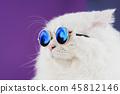 cat animal feline 45812146