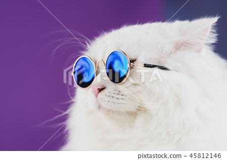 Close portrait of white furry cat in fashion sunglasses. Studio photo. Luxurious domestic kitty in 45812146