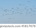 Group with flying birds 45817676