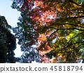 ต้นไม้,ฤดูใบไม้ร่วง,ผักใบ 45818794