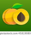 apricot, vector, yellow 45819089