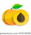apricot, vector, paper 45819090