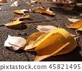 ต้นเมเปิล,หญ้าแห้ง,ใบไม้ร่วง 45821495