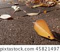 ต้นเมเปิล,หญ้าแห้ง,ใบไม้ร่วง 45821497
