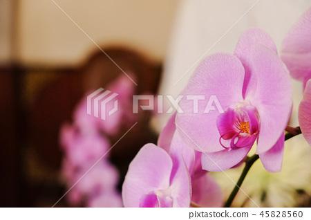 美麗的蘭花花,種子種植室。背景是Kore主席。透明的外面的有田有代。 45828560