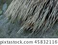인도 변수 편지 고슴도치의 허리케인 45832116