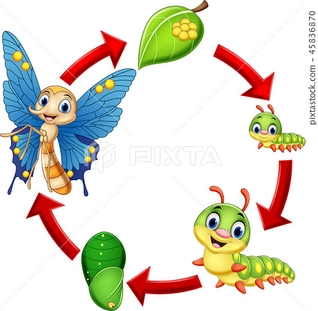 Illustration of butterfly life cycle 45836870