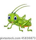 แมลง,คริกเก็ต,เวกเตอร์ 45836873