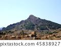 제주 바굼지 오름(단산)의 아름다운 풍경이다 45838927