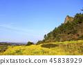 제주 바굼지 오름(단산)의 아름다운 풍경이다 45838929